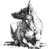 Lying dog. Vector image of a lying watching dog royalty free illustration
