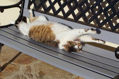 Lying down tabby cat on a bench Royalty Free Stock Photo