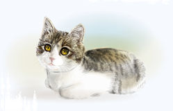 Lying funny  kitten. Royalty Free Stock Photo