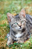 Lying gray cat outdoors royalty free stock photography