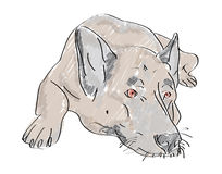 Lying hand drawn wolf-dog with sad eyes. Hand drawn illustration of lying wolf-dog with sad eyes Stock Image