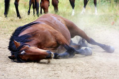 Lying horse Royalty Free Stock Photography