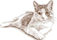 Lying house cat Stock Photos