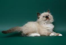 Lying kitten. Royalty Free Stock Image