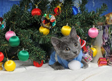 Lying kitten with christmas decorations. Christmas cat among a fur-tree, christmas balls and a tinsel royalty free stock images