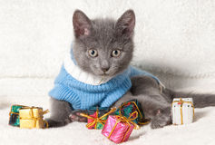 Lying kitten with christmas gift. Christmas cat among a presents stock photo