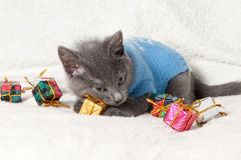Lying kitten with christmas gift Stock Photos