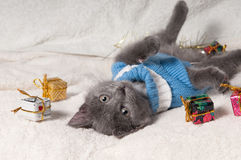 Lying kitten with christmas gift. Christmas cat among a presents royalty free stock images