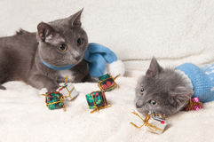 Lying kitten with christmas gift. Christmas cat among a presents royalty free stock photo