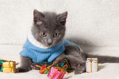 Lying kitten with christmas gift. Christmas cat among a presents stock photography