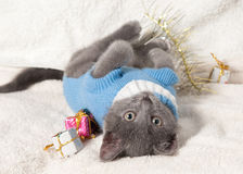 Lying kitten with christmas gift. Christmas cat among a presents royalty free stock image