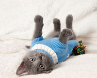 Lying kitten with christmas gift. Christmas cat among a presents royalty free stock photos