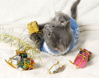 Lying kitten with christmas gift. Christmas cat among a presents stock photos