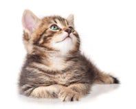 Lying kitten Stock Photos