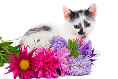 Lying kitten with flowers Royalty Free Stock Images