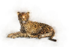 Lying leopard portrait Stock Photos