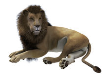 Lying Lion Royalty Free Stock Photography