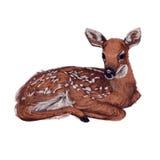 Lying little baby deer Stock Photo