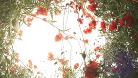 Lying in the Poppies : fish eye sky view stock video
