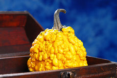 Lying pumpkin Royalty Free Stock Photo