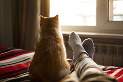 Lying and relaxing in bed with cat opposite the window on a sunny day. Lying and relaxing in bed with cat opposite the window on a sunny day Royalty Free Stock Photos