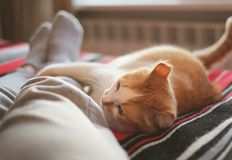 Lying and relaxing in bed with cat opposite the window on a sunny day. Lying and relaxing in bed with cat opposite the window on a sunny day Royalty Free Stock Images