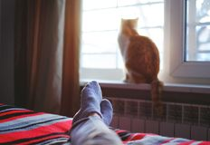 Lying and relaxing in bed on a sunny day, cat sitting on the window. Lying and relaxing in bed on a sunny day, cat sitting on the window Royalty Free Stock Image