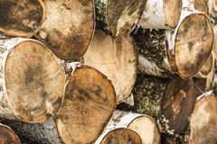 Lying sawn logs, close-up Stock Photography