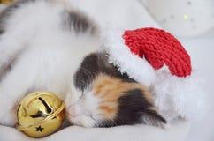 Lying sleeping kitten. Tortoiseshell cat, lying on sheepskin, christmas photo, xmas hat and great jingle bell, pink nose and paws Royalty Free Stock Photo