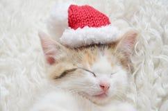 Lying sleeping kitten. Tortoiseshell cat, lying on sheepskin, christmas photo, xmas hat, pink nose and paws Royalty Free Stock Image