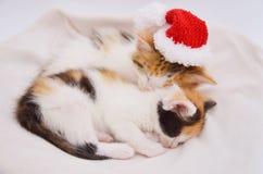 Lying sleeping kitten. Tortoiseshell cat, lying on sheepskin, christmas photo, xmas hat, pink nose and paws Royalty Free Stock Images