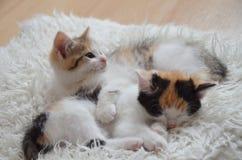 Lying sleeping kitten. Tortoiseshell cat, lying on sheepskin, pink paws, pink nose Royalty Free Stock Images