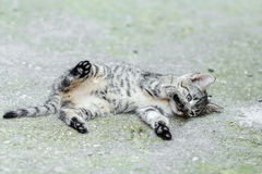 Lying small baby cat Stock Images