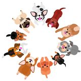 Lying small dogs looking up in circle. With colors vector illustration