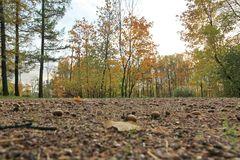 Autumn landscape.Acorns lying on the ground stock photography