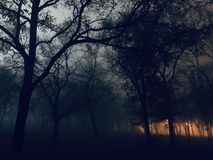 Lykta i dimman royaltyfria foton