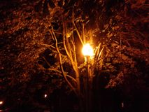 Lykta i natten royaltyfri fotografi