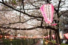 Lykta i Sakura Festival i Japan Lyktan läser ljuset av guden Royaltyfri Bild