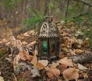 Lykta med magiskt ljus i skogen arkivfoto