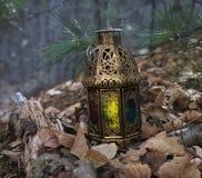 Lykta med magiskt ljus i skogen 2 arkivfoto