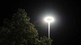 Lyktabränningen på en pol på natten i parkerar Materiell?ngd i fot r?knat Den glödande moderna lyktan i parkerar på natten arkivfilmer