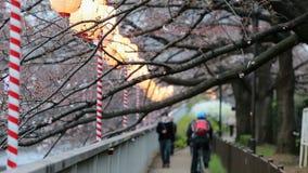 Lyktor i Sakura Festival på gångbanan, Tokyo, Japan lager videofilmer