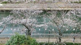 Lyktor i Sakura Festival på gångbanan, Tokyo, Japan stock video