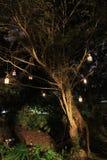 Lyktor som hänger från träd på natten royaltyfri foto
