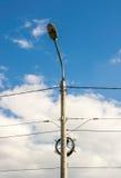 Lyktstolpe med elektriska trådar Fotografering för Bildbyråer