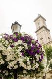 Lyktstolpen med vit och blått blommar på en bakgrund av de gamla husen av Lviv på marknadsfyrkanten Ukraina Fotografering för Bildbyråer