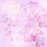 Lylac Festive background Stock Image