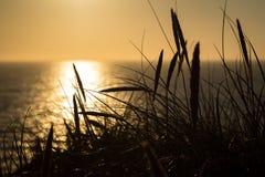 Lyme gräs i kontur mot solen som ställer in över havet Arkivfoton