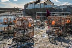 LYME REGIS, DORSET/UK - 22 DE MARZO: Pescador Repairing His Lobst Fotografía de archivo