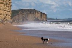 LYME REGIS, DORSET/UK - 22 MARZO: Linea costiera giurassica a Lyme con riferimento a Fotografia Stock Libera da Diritti